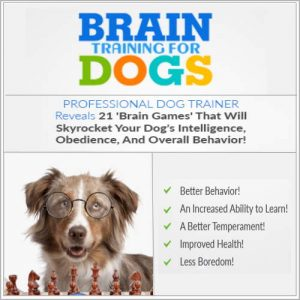 Brain Training For Dogs