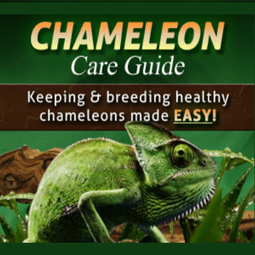 Chameleon Care Guide