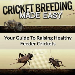 Cricket Breeding Made Easy
